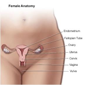 Vaginite
