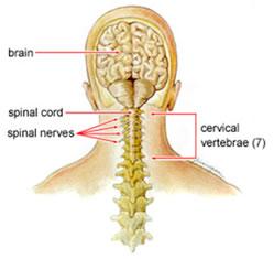 Artrosi cervicale in breve for Mal di testa da cervicale quanto puo durare
